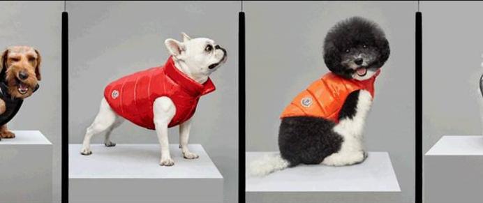 la collab Moncler x Poldo Dog Couture