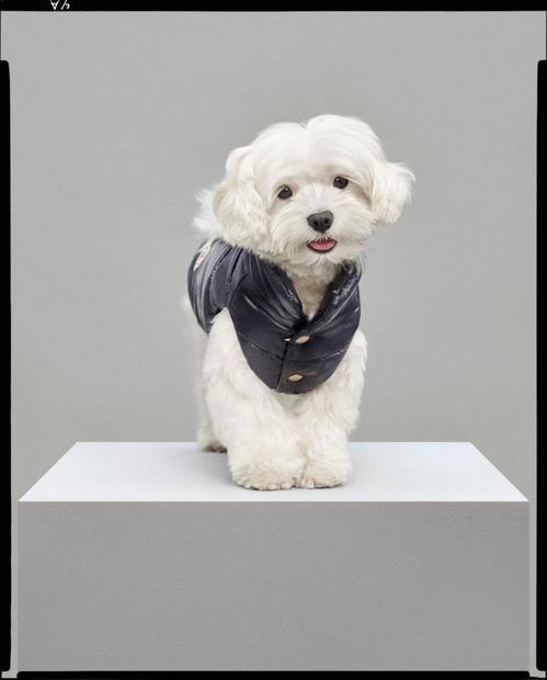 moncler___poldo_dog_couture_fw17d_jpg_4293_north_499x_white