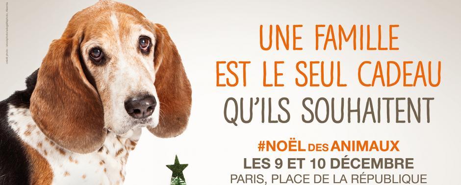 noeldesanimaux2017paris_chien_1