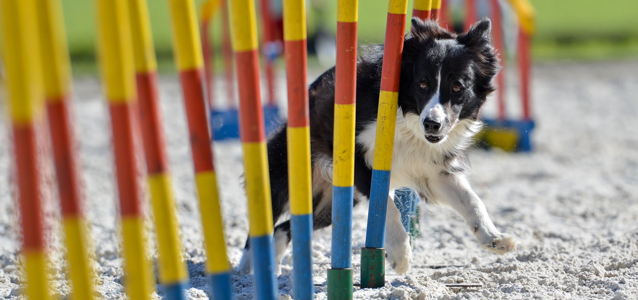 sport-canins