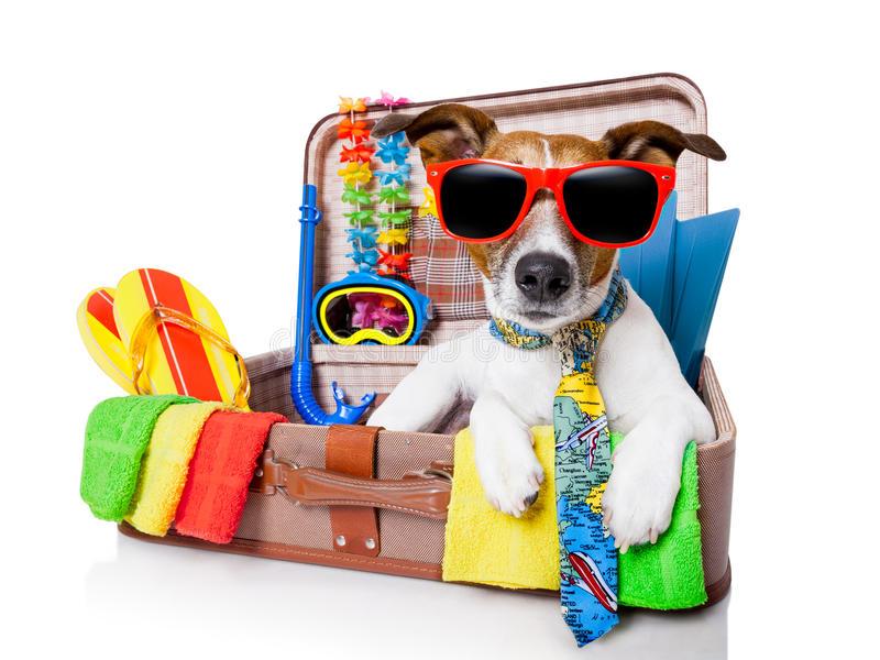 chien-de-vacances-d-été-31584127