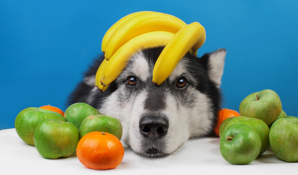 Fruits-Dogs-Can-Eat