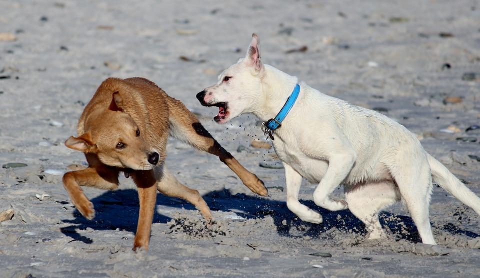 Conflit entre chien missproutprout