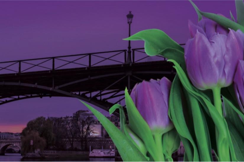 338855-des-tulipes-contre-le-cancer-sur-le-pont-des-arts-3