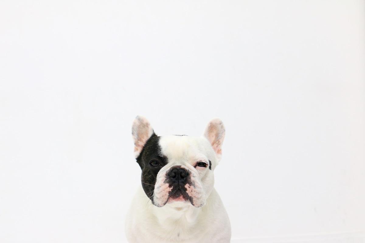 Remèdes maison pour soigner une otite chez un chien / Home
