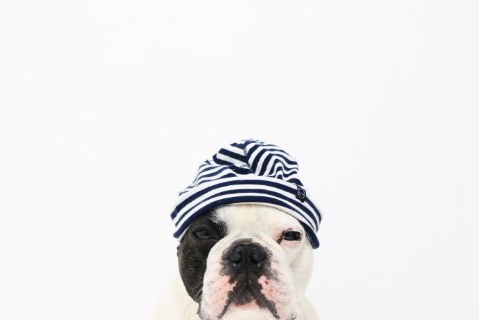 Conseils pour que votre chien se baigne en toute sécurité Tips for your dog swims safely Health Missproutprout